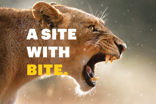A Site With Bite - Pembrokeshire Web Design Powerful Online